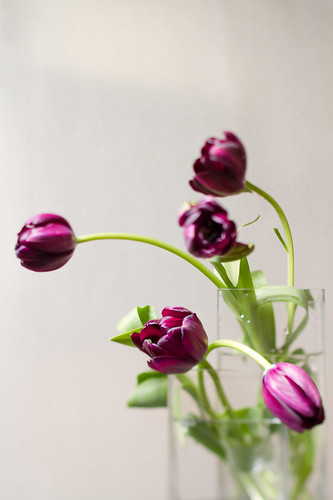 1003 flowers #1