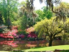 Gardens @ Middleton Place (desbah) Tags: sc gardens azaleas southcarolina charleston plantation spanishmoss middletonplace