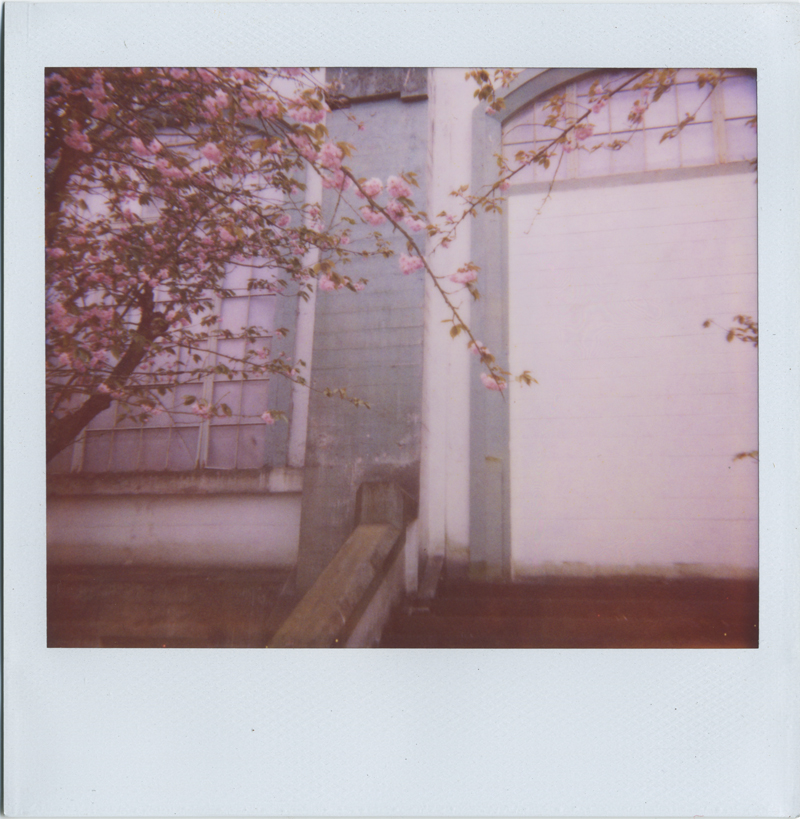 cherry trees and abandoned buildings