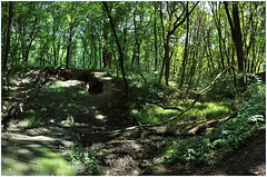 142 (AnkhaiStenn) Tags: wood tree green grass forest river stream russia ukraine russian ukrainian thunder ussr rovenki