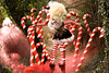 Wonderland : The Candy Cane Witch (Kirsty Mitchell) Tags: fairytale forest woods circus stripes katie fantasy wig wonderland storybook magical stilts candycanes kirstymitchell thelightwasthatofdreams elbievaneeden thecandycanewitch