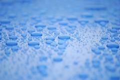 Raindrops keep falling on my hood (Scilla sinensis) Tags: blue water rain drops wasser explore blau vatten regen regn polished perlen tropfen blå regentropfen droppar explored politur abperlen wasserabweisend