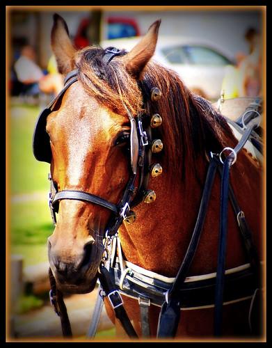 Cavalo / Horse