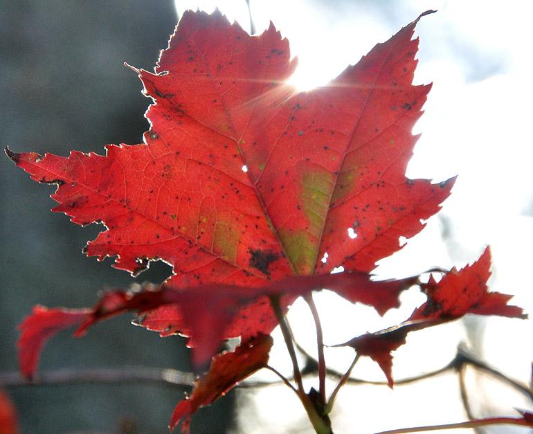 leaf2_0012