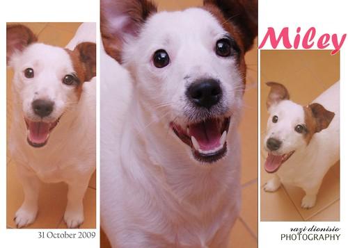 My puppy, Miley 4068295460_88bafa858c