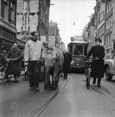 04-20-1955_13241_1 Murugan (IISG) Tags: elephant male men amsterdam animals bike bicycle uniform traffic police tram dieren 310 policeman olifant fiets mannen politie verkeer vervoer tram5 benvanmeerendonk politieagent