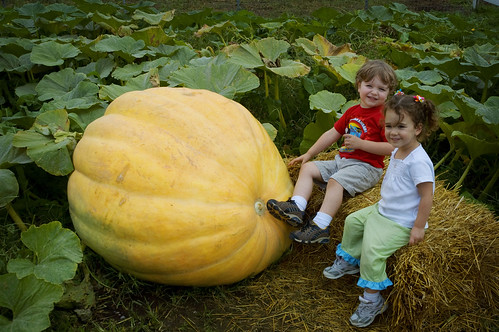 that's a big pumpkin