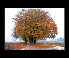 Autumn / Herfst (Theo Kelderman) Tags: autumn trees netherlands leaves canon landscape bomen herfst nederland 2009 overijssel landschap holten bladeren theokeldermanphotography