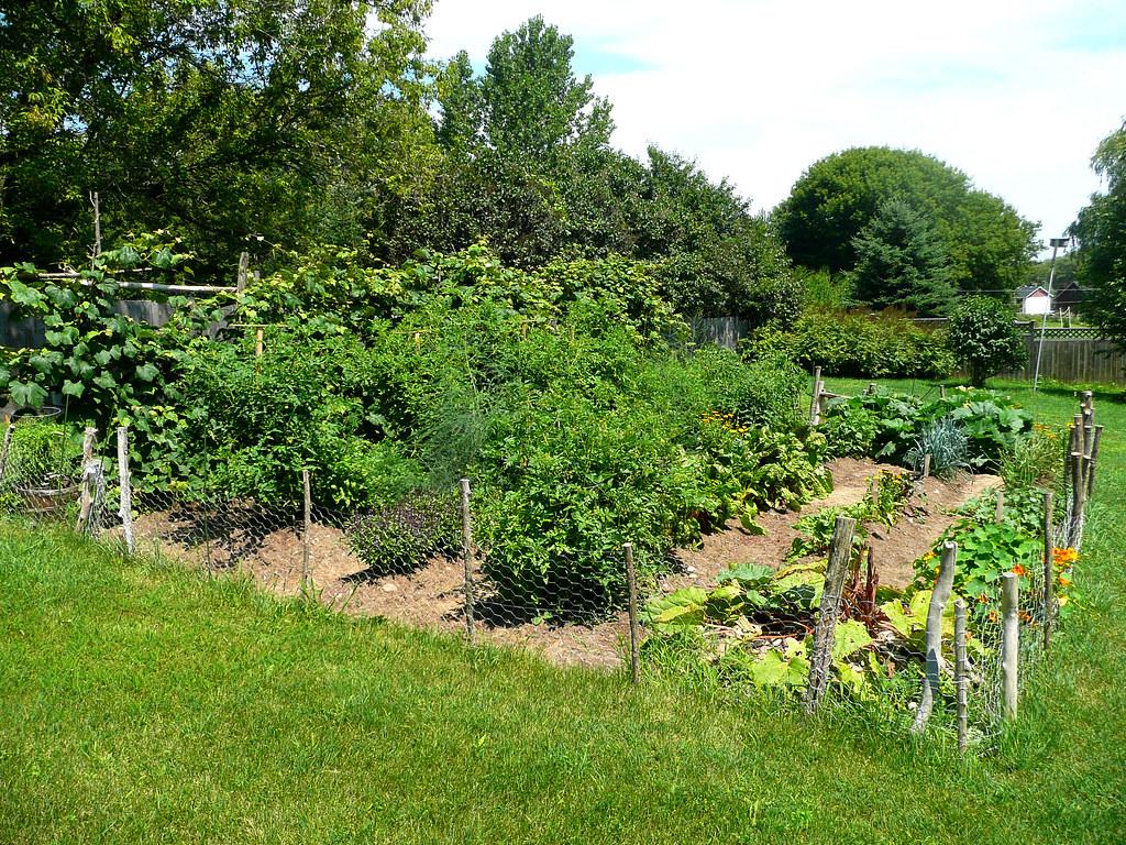 Vegetable Garden July 2009