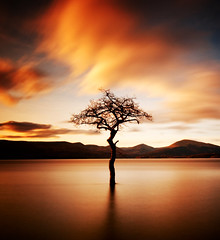 """That tree"" at Milarrochy, Loch Lomond (Semi-detached) Tags: winter sky tree weather silhouette clouds that landscape bay scotland afternoon warmth scottish scene filter loch submerged lomond trossachs density neutral balmaha topseven nd1000 superaplus aplusphoto milarrochy sunsetmania micarttttworldphotographyawards micartttt"