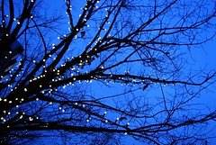 holiday lights at twilight (kmrphotography