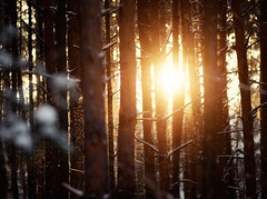 Winter Sun (Philipp Klinger Photography) Tags: wood winter light shadow sun snow cold tree fall nature backlight forest landscape woods nikon warm dof counter bright bokeh poland polska falling flakes gra zielona nikon180mmf28 lubuskie d700 lubusz