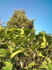 http://farm3.static.flickr.com/2710/4258825519_9263bc9315_m.jpg