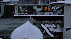 Winter in Amsterdam (Kirsteeen) Tags: winter white snow ice amsterdam boat swan winterinamsterdam