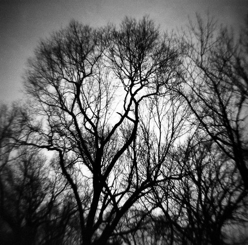 Rhode Island Trees
