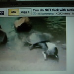 The turtle ate the swan thumbnail