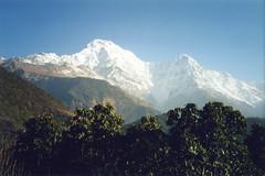 Annapurna South from Kimche, Nepal (east med wanderer) Tags: nepal trekking trek himalayas annapurnasouth kimche theindiatree worldtrekker