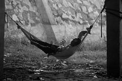 (Flash Parker) Tags: travel river fishing delta vietnam waters murky mekong flashparkerphotography vietnam25892