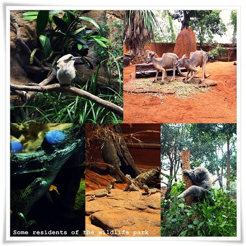 wildliferesiblog
