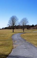 Path (Rafakoy) Tags: road blue trees sky ny newyork tree green film grass 35mm 50mm photo path side country longisland epson fujifilm v600 af nikkor f18 fujichrome provia perfection 118 100f paviment fujichromeprovia100f f18d rdpiii epsonv600 epsonperfectionv600photo epsonperfectionv600 aldorafaelaltamirano rafaelaltamirano aldoraltamirano