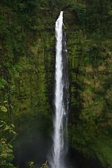Akaka Falls (laurel!anne!mundy!) Tags: tree water forest giant hawaii waterfall rainforest falls huge akaka plummet