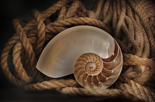 Nautilus Shell and Rope