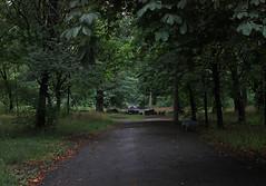 143 (AnkhaiStenn) Tags: wood tree green grass forest river stream russia ukraine russian ukrainian thunder ussr rovenki