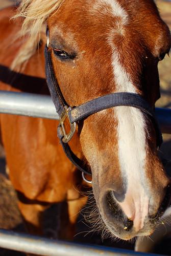 horse face-0189