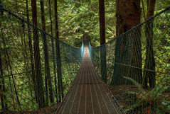 Juan de Fuca Trail: Suspension Bridge (Brandon Godfrey) Tags: world pictures bridge trees canada fern green nature creek forest point landscape geotagged outdoors photography moss scenery bc forrest suspension photos pics earth britishcolumbia branches sony awesome great perspective scenic scene victoria canadian vancouverisland trail cedar creativecommons pacificnorthwest northamerica wilderness ferns alpha dslr juandefuca vanishing westcoast processed hdr highdynamicrange rugged jordanriver sooke a300 dissappearing photomatix werstern tonemapped tonemapping petewolfecreek thechallengegame challengegamewinner dslra300 sonya300