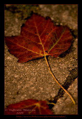 """""""... Such A Lot Of Pain On The Earth""""  (Supersyl08) Tags: autumn fall leaves automne maple fallcolors rush laurentians feuilles rable laurentides couleursdautomne thelargerbowl"""