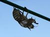 Cicada's slough