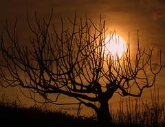 ... l'inverno si prepara (FranK.Dip) Tags: sunset tree tramonto cielo sole albero controluce rami brindisi dip2 frankdip 11192009