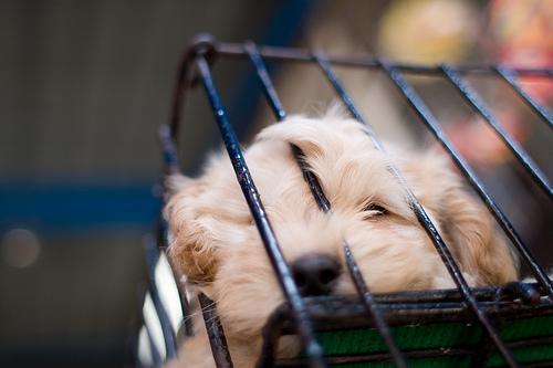 puppycage toolmantim