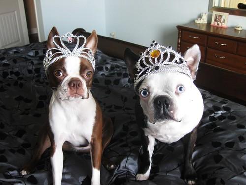 Duchess of Tines & King Hogwarts