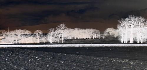 2010 Neige plaine de l'aire 014 - négatif
