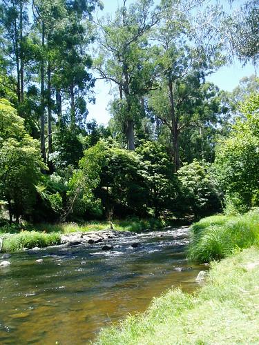 Warburton - Yarra river