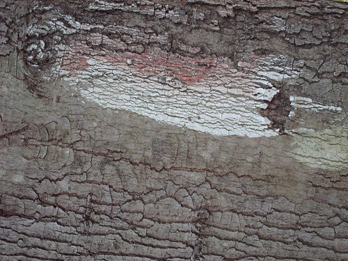 Distressed Bark Texture 1