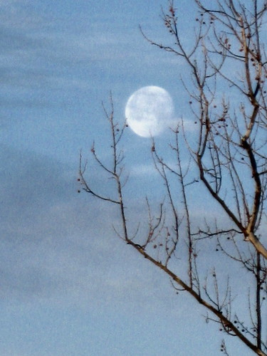 Moon and Sycamore Tree