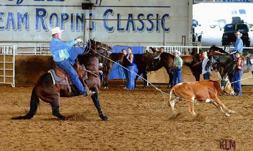 Junior Stallion - HR Tiny Tim