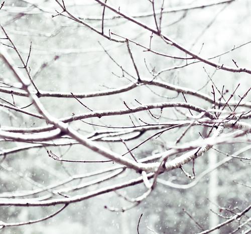 [43/365] oh, snow.