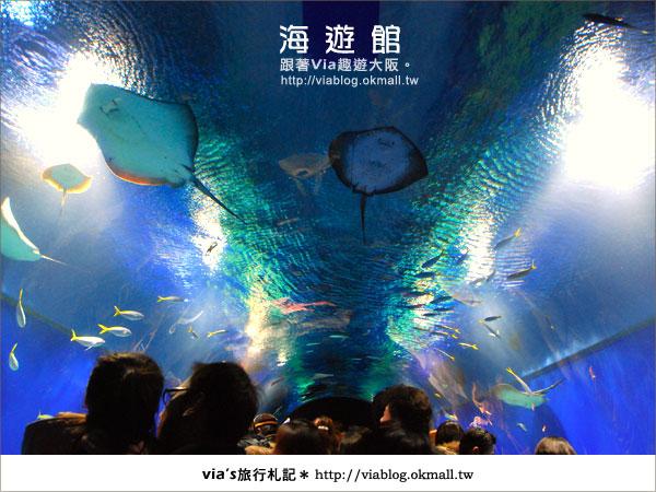 【via關西冬遊記】世界最大極的水族館~大阪海遊館5