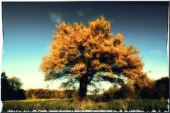 (Christoph Zurbuchen) Tags: tree landscape schweiz switzerland nikon suisse dream picture scene dreamy paysage paysages d90 coth flickrsbest imagesforthelittleprince miasbest