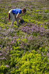 Dégustation de myrtilles (Vaccinium myrtillus) (Puy-de-Dôme (63), France). (Emmanuel LATTES) Tags: flowers woman france flower nature fleur girl fruits french berry berries eating heather femme blueberry eat heath gathering manger ericaceae pick shrub grab moor fille collect blueberries picking collecting auvergne redfruit baie grabber puydedôme harvesting grabbing lande huckleberry picker bilberry whortleberry myrtille puydedome baies bilberries myrtilles huckleberries vacciniummyrtillus arbuste bruyère cueillette ramasser airelle fruitrouge cueillir ramassage airelles ericasp whortleberries hauteschaumes puydedôme63 récolter crêtesduforez myrtillier brimbelle parcnaturelrégionallivradoisforez ericacées brimbelles