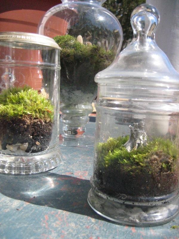 Moss In Jars