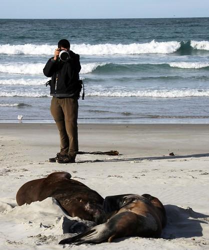 Neerav Bhatt - Photographing Sea Lions