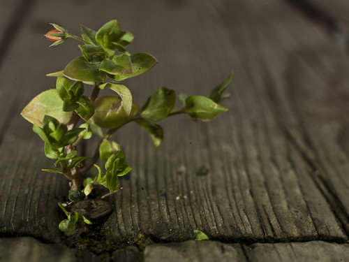 california wood plant flower macro nature screw hasselblad deck aptus22