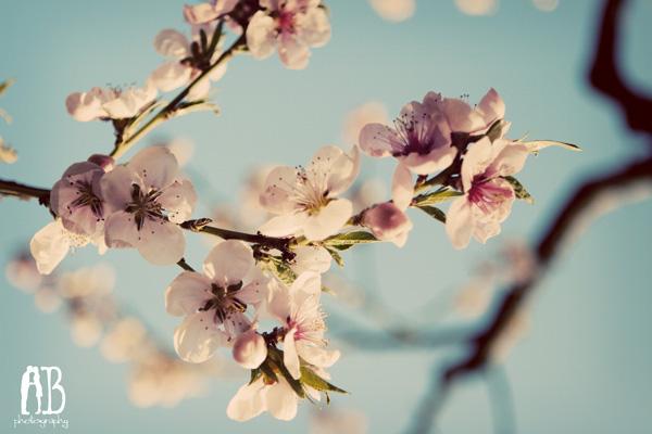 spring3b