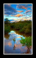 Mangrove Sunset (scorpio.bird) Tags: sunset reflections mangrove hdr 3xp tingalpacreek