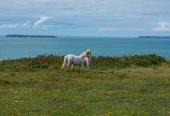 together..... forever (barfi*) Tags: wales pembrokeshire anglepeninsula love pony nature landscape