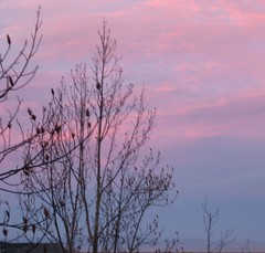 Sunset1d.JPG